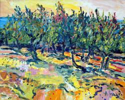 Champ d'oliviers au lac de Trasimeno