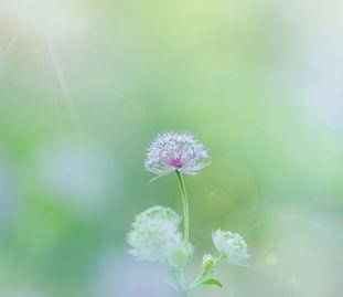 淡い花画像
