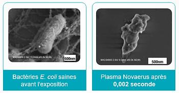 Ecoli apres nanostrike.png