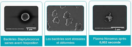 Staphylocoque apres nanostrike.png