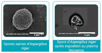spores apres nanostrike.png