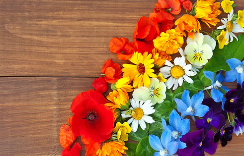 A rainbow of colorful flowers: red poppi