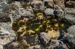 Rockpool, Giant's Causeway