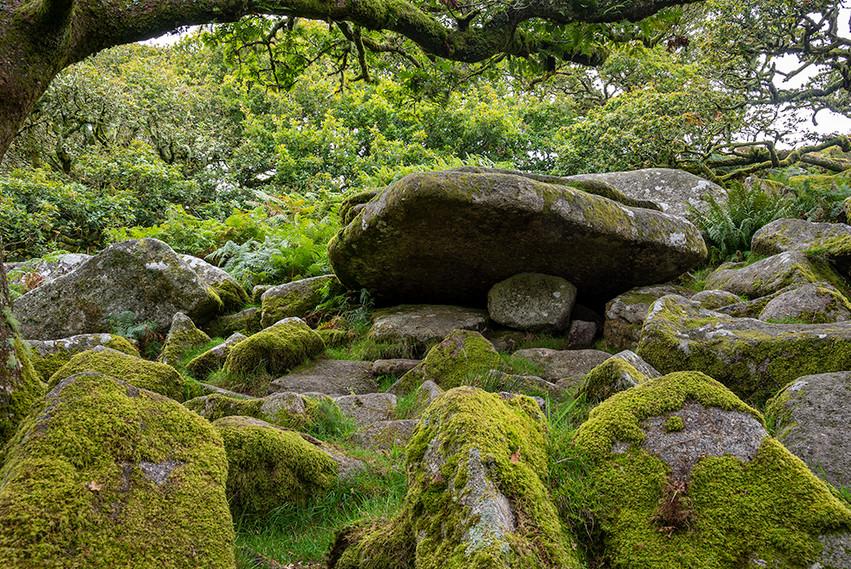 Wistman's Wood 06