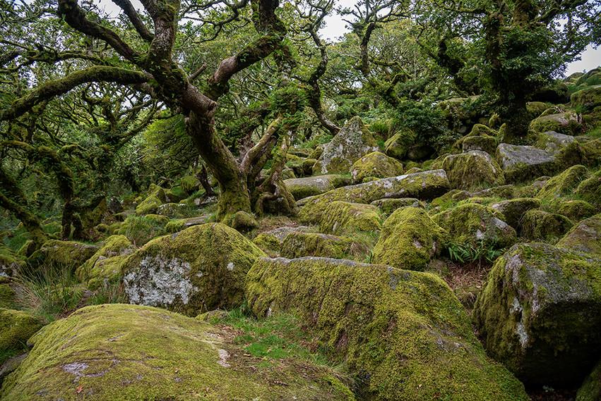 Wistman's Wood 21