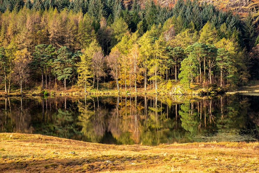 Autumn reflections in Blea Tarn