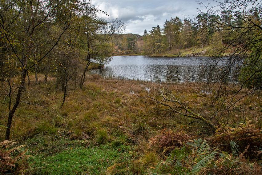 View across Tarn looking north 02