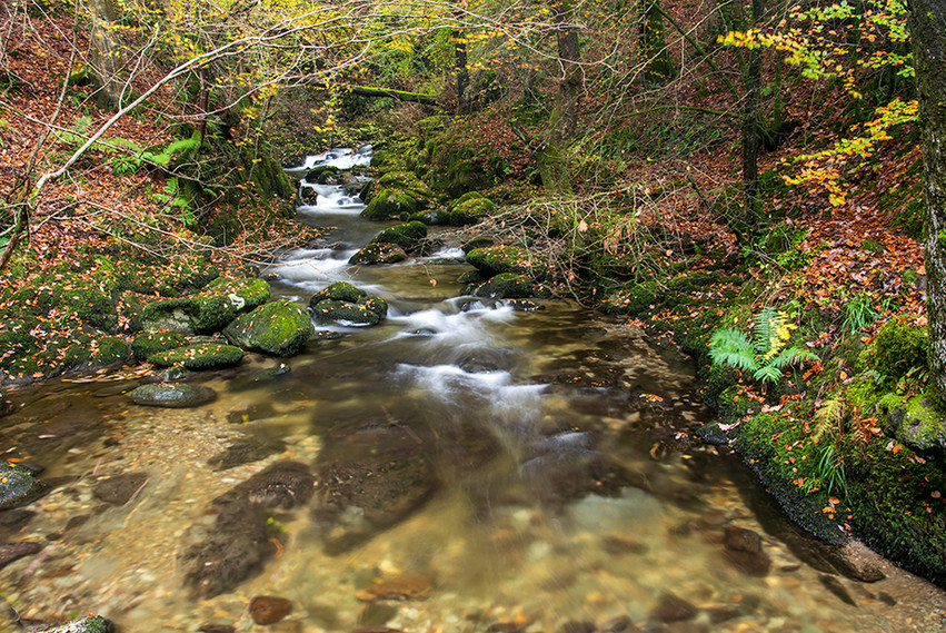 Looking up the beck towards the Force in autumn