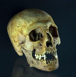 Viking Skull, Yorvik Museum, York