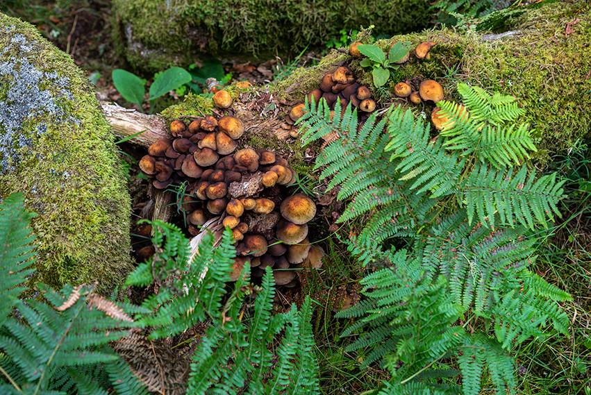 Wistman's Wood 18