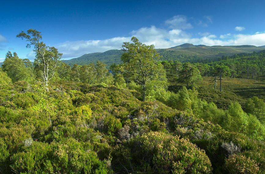 Glen Affric View 06