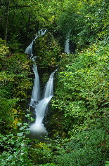 Stock Ghyll Force (summer) 06