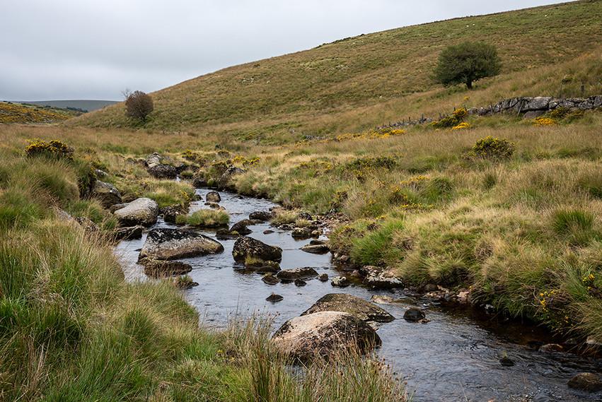 West Dart River flowing past Wisman's Wood 2