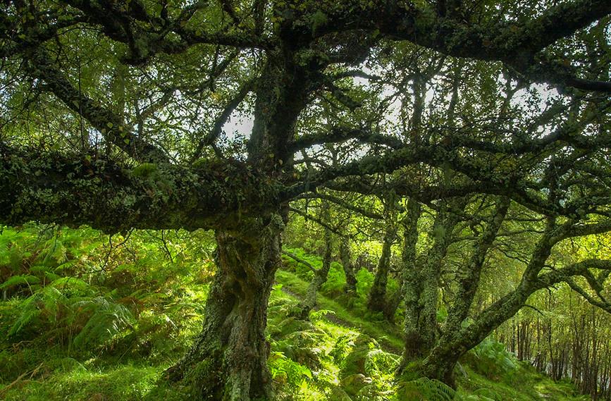 Lichen covered tree 03