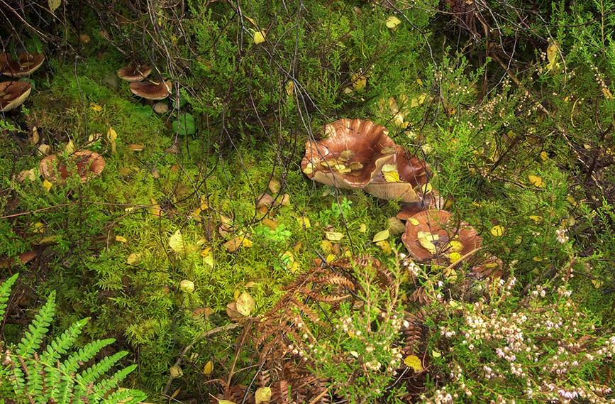 Fungi, Glen Affric 01