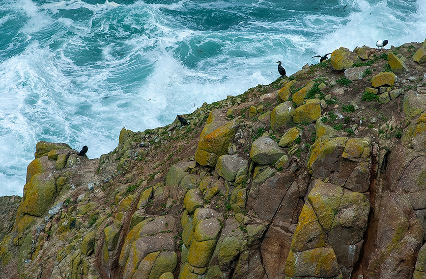 Fishing birds amongst the surf