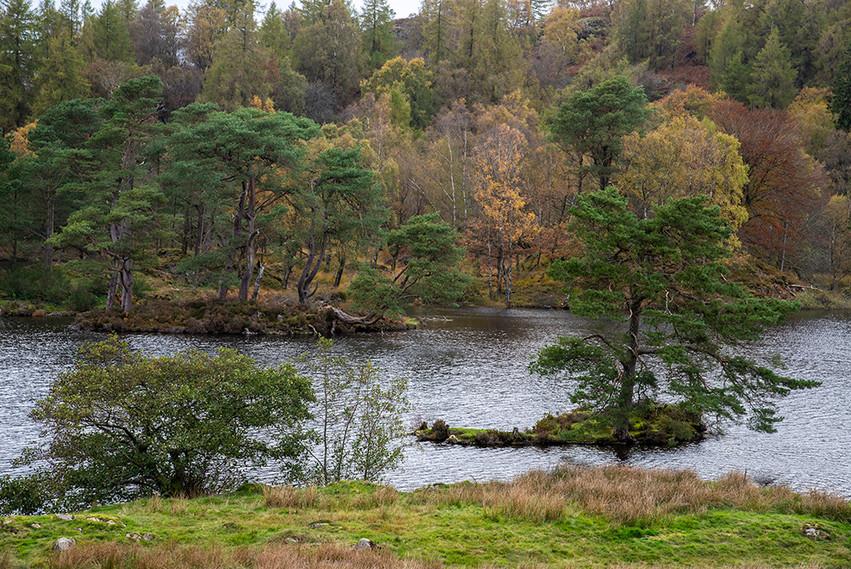 Small island in the lake 03