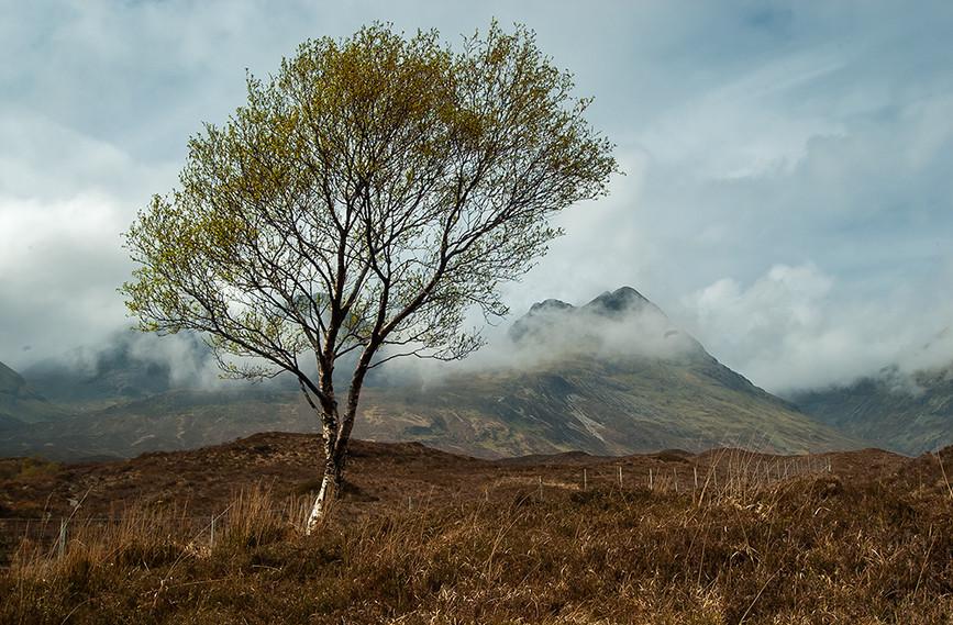 Lone tree before Slat Bheinn (left) & An Stac (right)