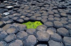 Giant's Causeway Detail