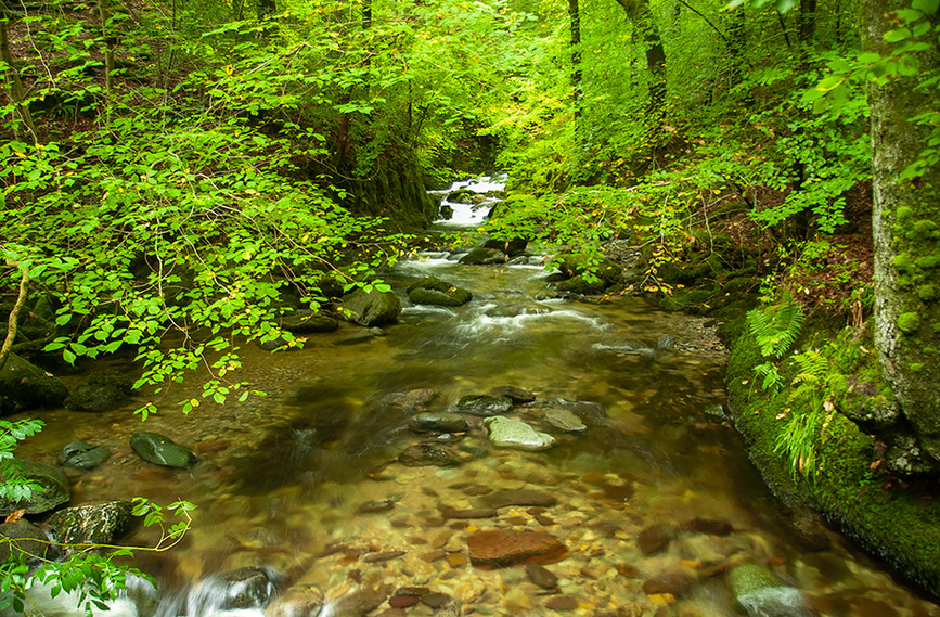 Looking up the beck towards the Force in summer 01