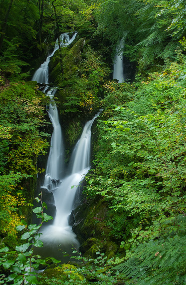 Stock Ghyll Force (summer) 05