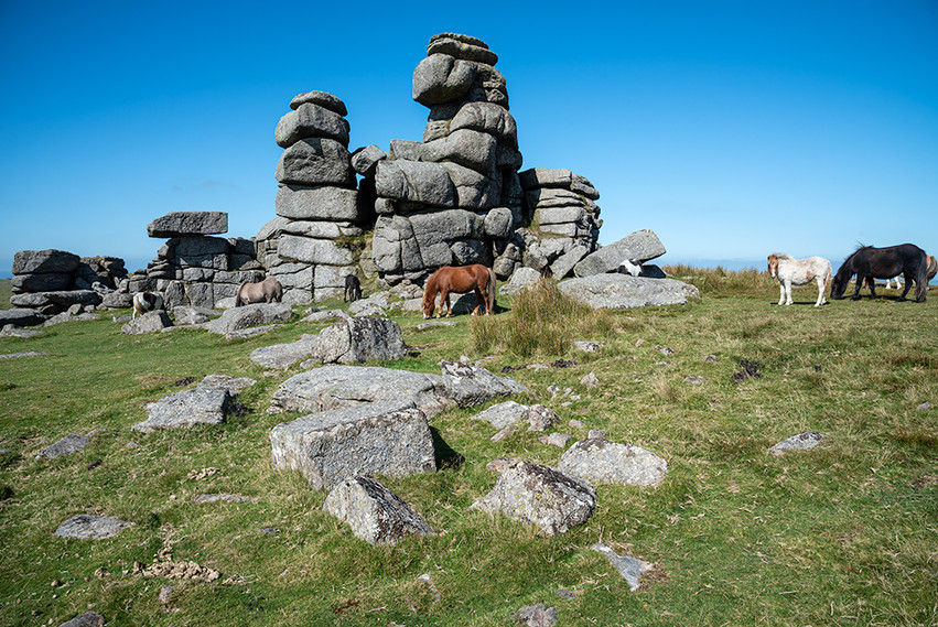 Granite outcrop on Great Staple Tor with Dartmoor ponies