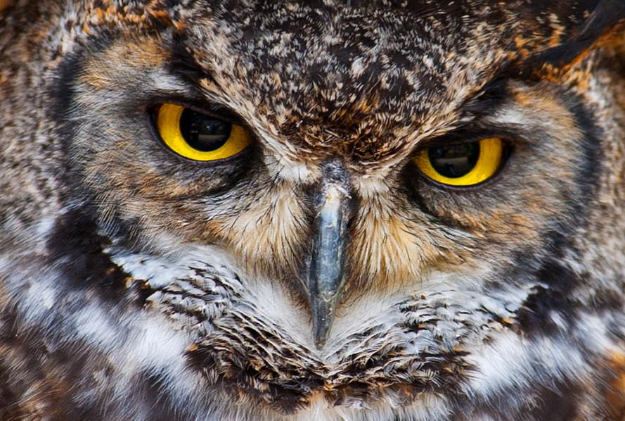 Owl's Eyes