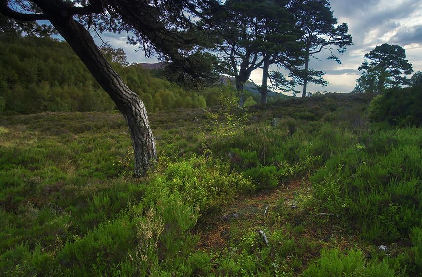 Glen Affric View 07