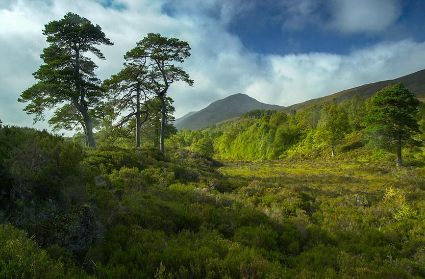 Glen Affric View 01