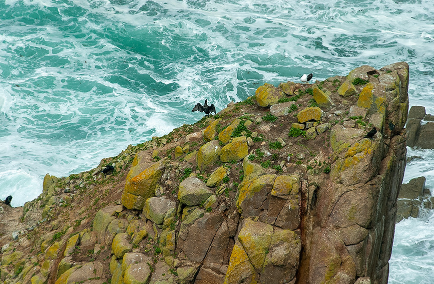 Cormorant stretching on the cliffs