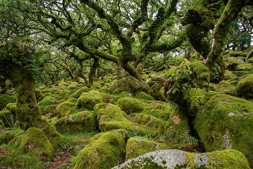 Wistman's Wood 09