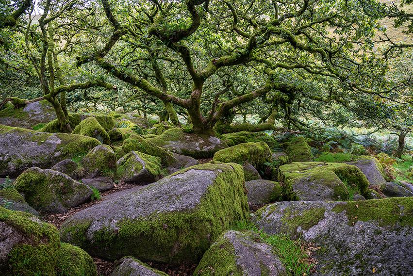 Wistman's Wood 04