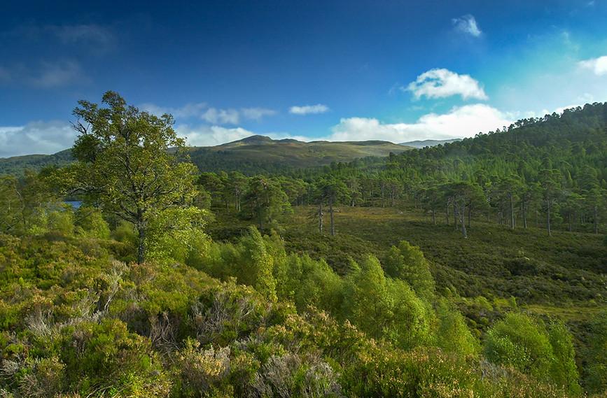 Glen Affric View 03