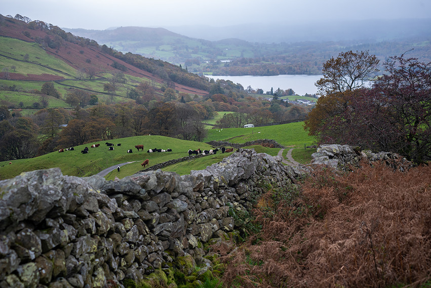 View back towards Windemere from 'The Struggle'
