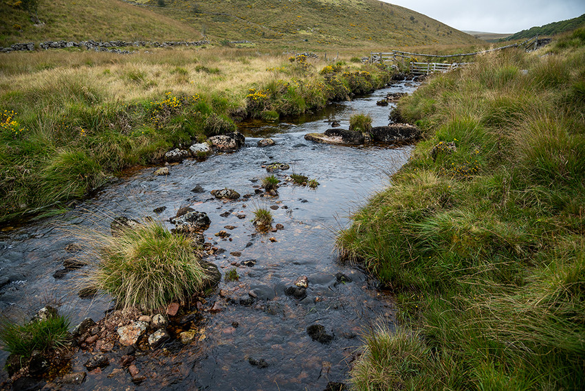 West Dart River flowing past Wisman's Wood 1