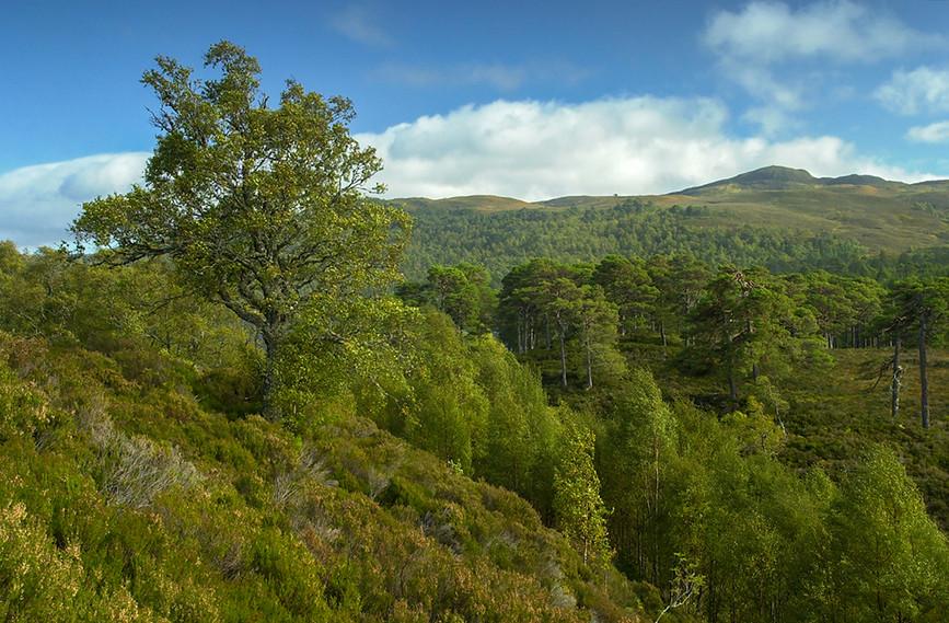 Glen Affric View 05