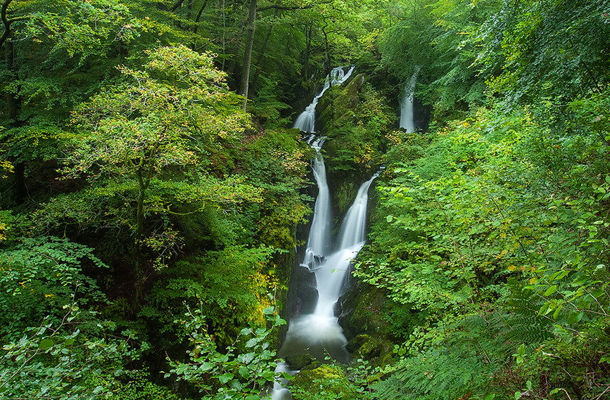 Stock Ghyll Force (summer) 07