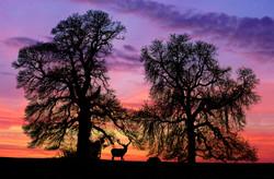 Highland Sunset, Scotland