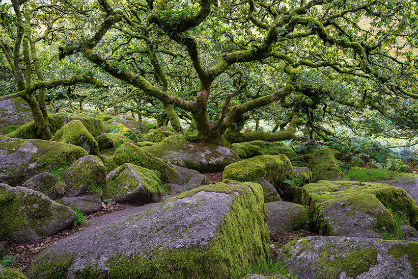 Wistman's Wood 03