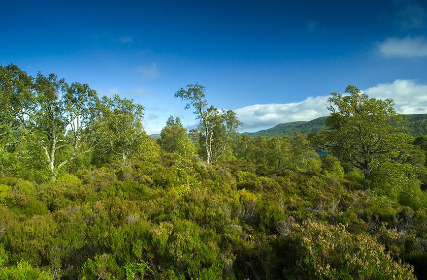 Glen Affric View 04