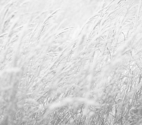 grasses-fade.jpg