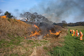Controlled burning team at work c Rob St