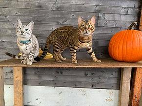 Perle et Saphir Halloween.jpg
