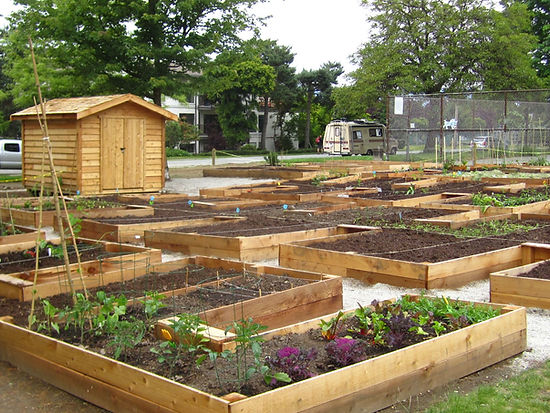 Brewery Creek Community Garden in Guelph Park