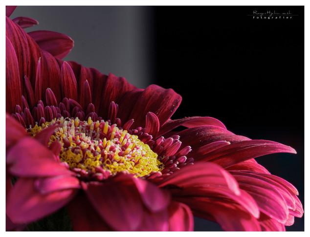 flower_stack.jpg
