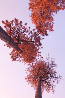 Seuss Trees.