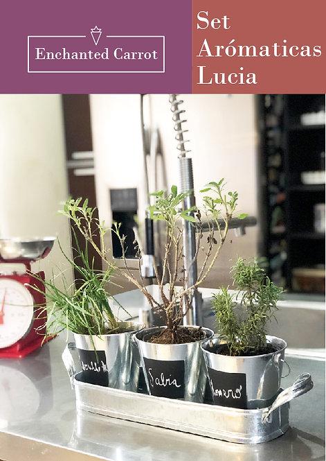 Set de aromáticas Lucia