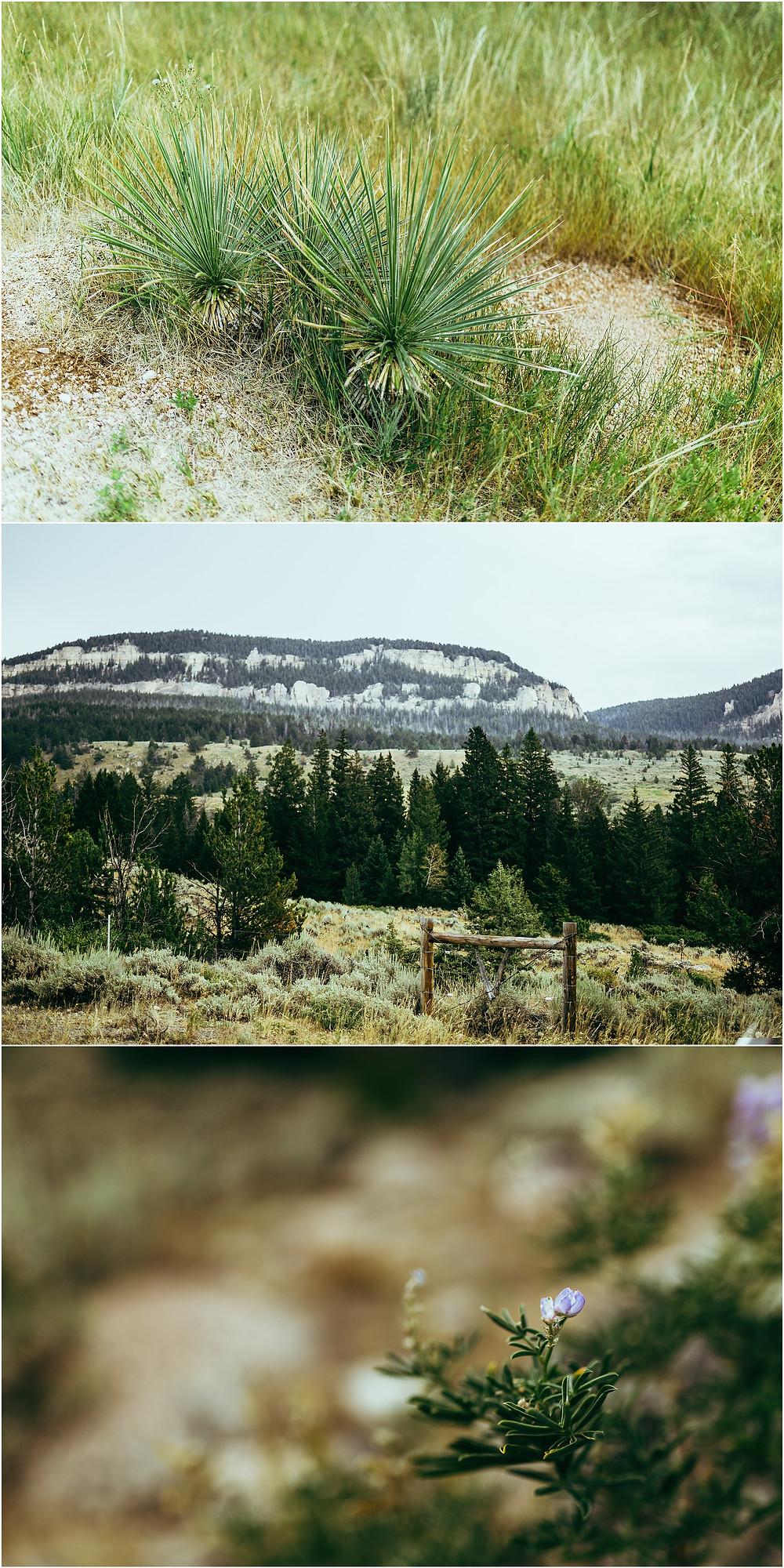 Iowa City Photographer travel Wyoming