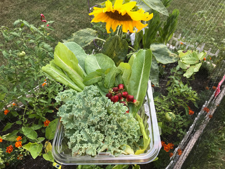Dig in! Plant a Vegetable Garden and Grow Your Own Food