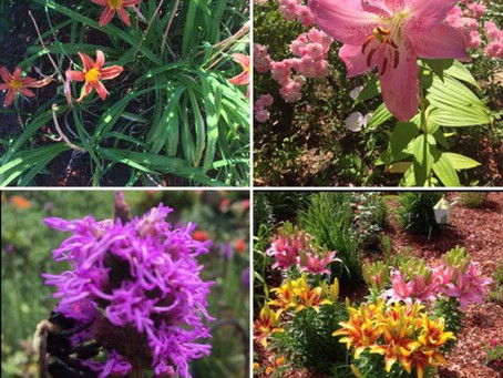 The Spiritual Dimension of Gardening